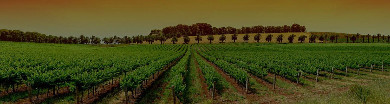 Temecula Limo Wine tours